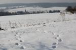 Czech Winter
